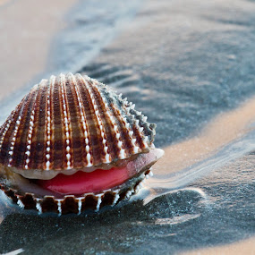 ;oP by Daniela Maskova - Animals Sea Creatures ( beach shell sand )