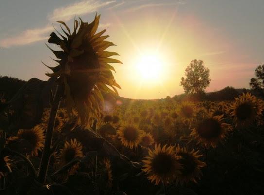 Il tramonto di Van Gogh di lauretta