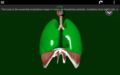 3d canine anatomy software 11 free download