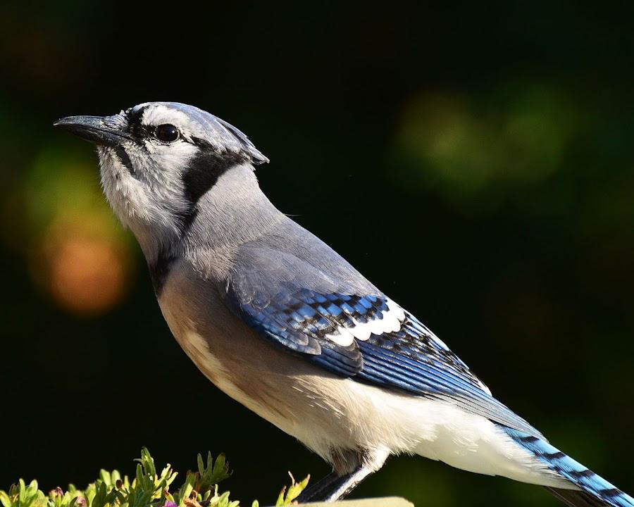 by Hélène Girard - Animals Birds