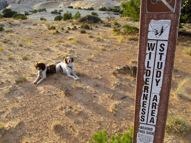 "Dogs in the wilderness (with a lowercase ""w"")"