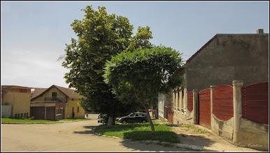 Photo: Oțetar-roșu (Rhus typhina)     din Turda, Str. Salinelor - 20019.06.12