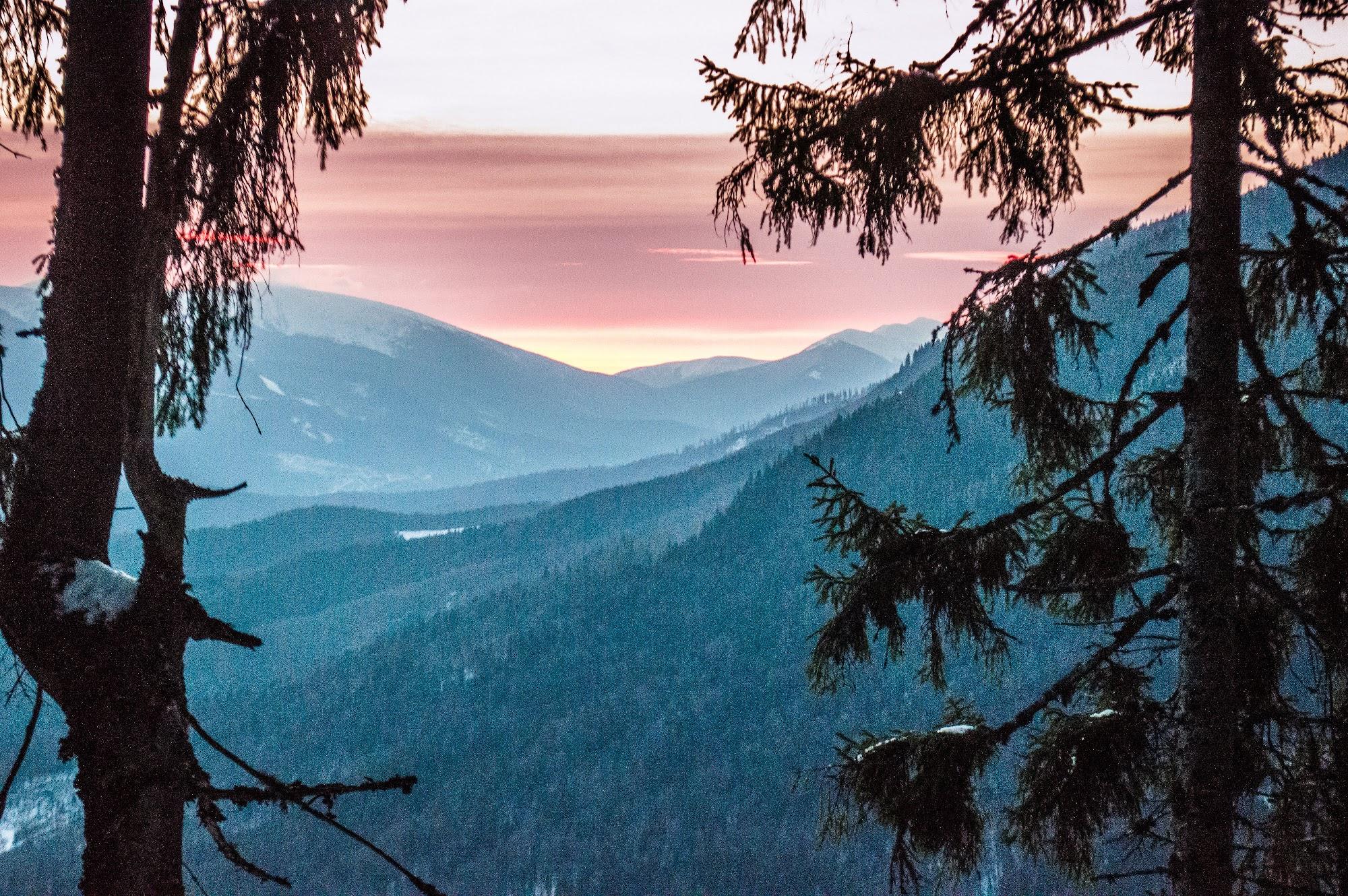 Схили лісислих зимових гір
