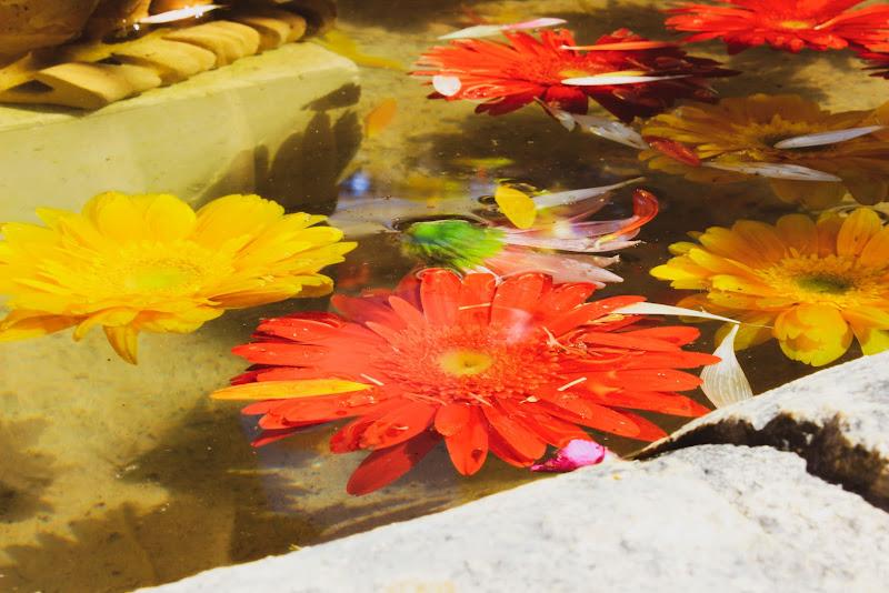 i colori dei fiori di federica ambrogio