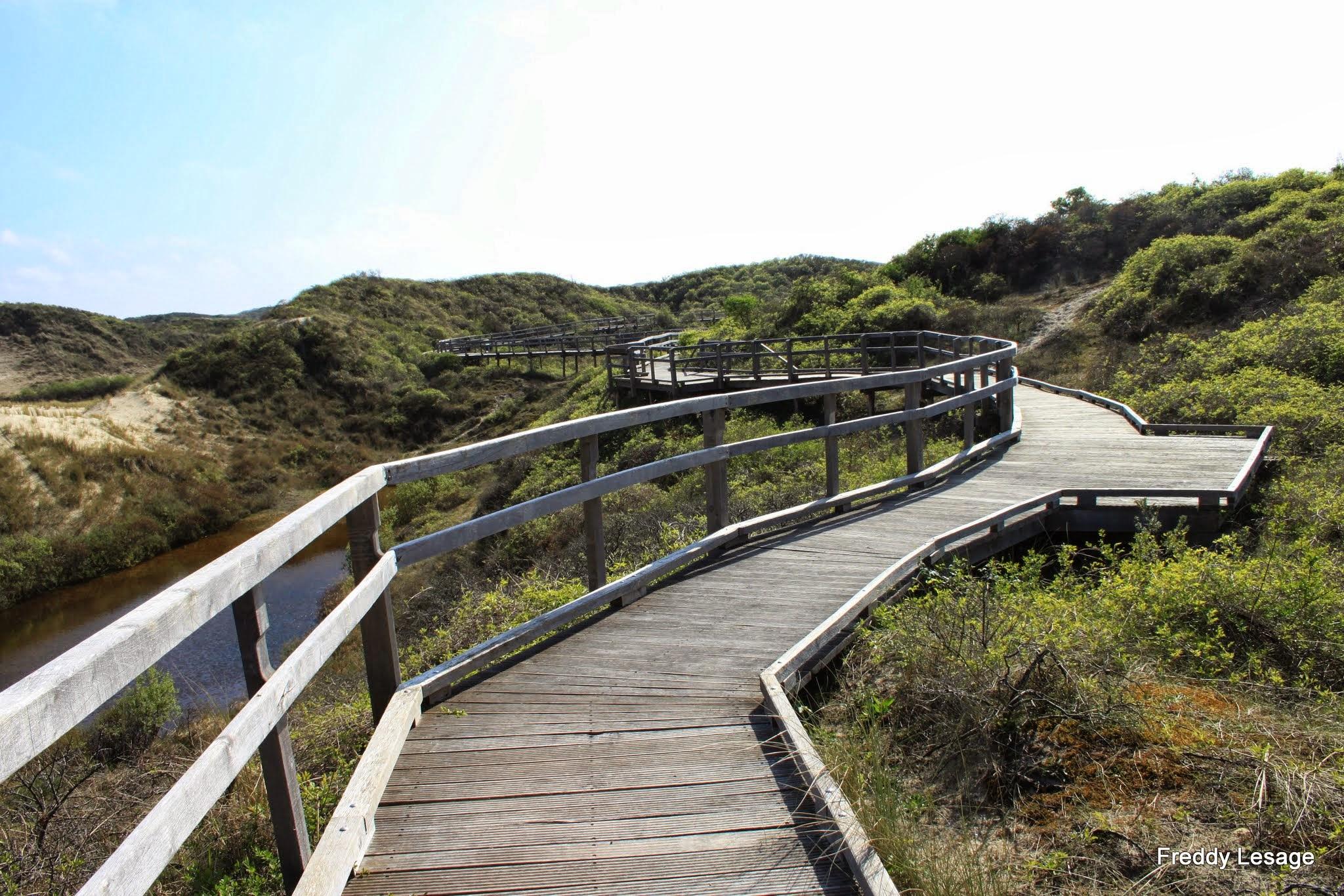 Photo: We starten met een loopbruggenparcours van 1,7 km in de beschermde duinen van Merlimont-Plage.