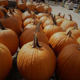 by Denise O'Hern - Public Holidays Halloween