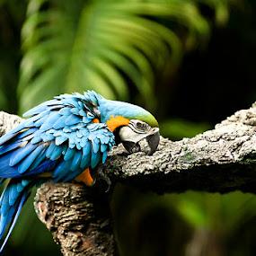 The Light Blue by Agung Cahyono - Animals Birds
