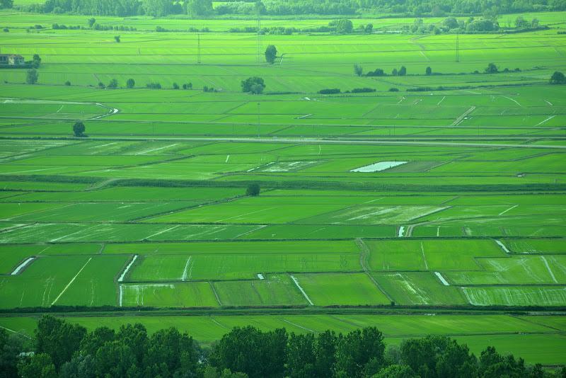 La pianura delle risaie di skirod