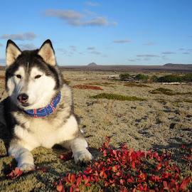 Autumn with Ronja by Bjarklind Þór - Animals - Dogs Portraits