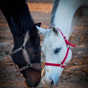by Ivana Pavičić - Animals Horses