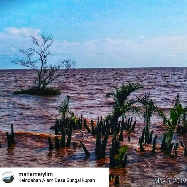 Wisata Mangrove Desa Sungai Kupah Wisata Kubu Raya