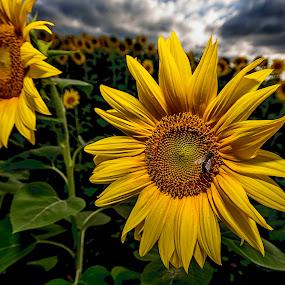 by Vladimir Jablanov - Flowers Flowers in the Wild