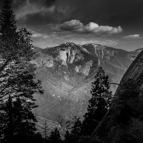 Sequoia Forest B&W by Matthew Clausen - Black & White Landscapes ( nature, black and white, background, anseladams, sequoia, forest )