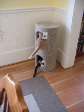 Photo: Cat butt!