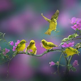by iD 's - Animals Birds ( #8rtcoMagazine )