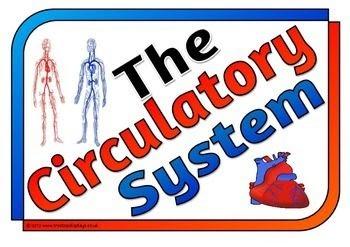 Human Body 2.0: Circulatory System