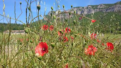 Photo: Klaprozen, zon en bergen