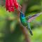 Hummingbird #6Final.jpg