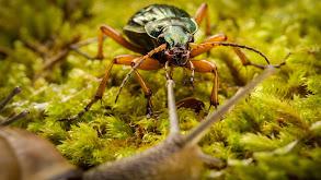 God's Darling: Beetles thumbnail