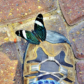 Little Buddy on My Shoe by Tim Hall - Animals Insects & Spiders ( hiking boot, butterfly, cobbelstone, shoe,  )