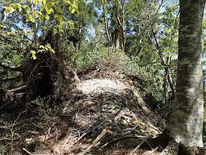 根ごと倒れる木が多い