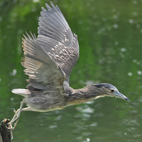 by Vinay Tyagi - Animals Birds