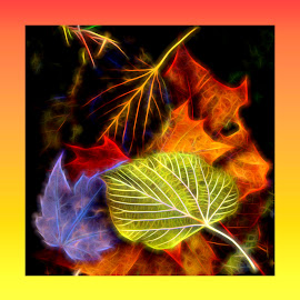 Leaf Imagery by Millieanne T - Digital Art Abstract