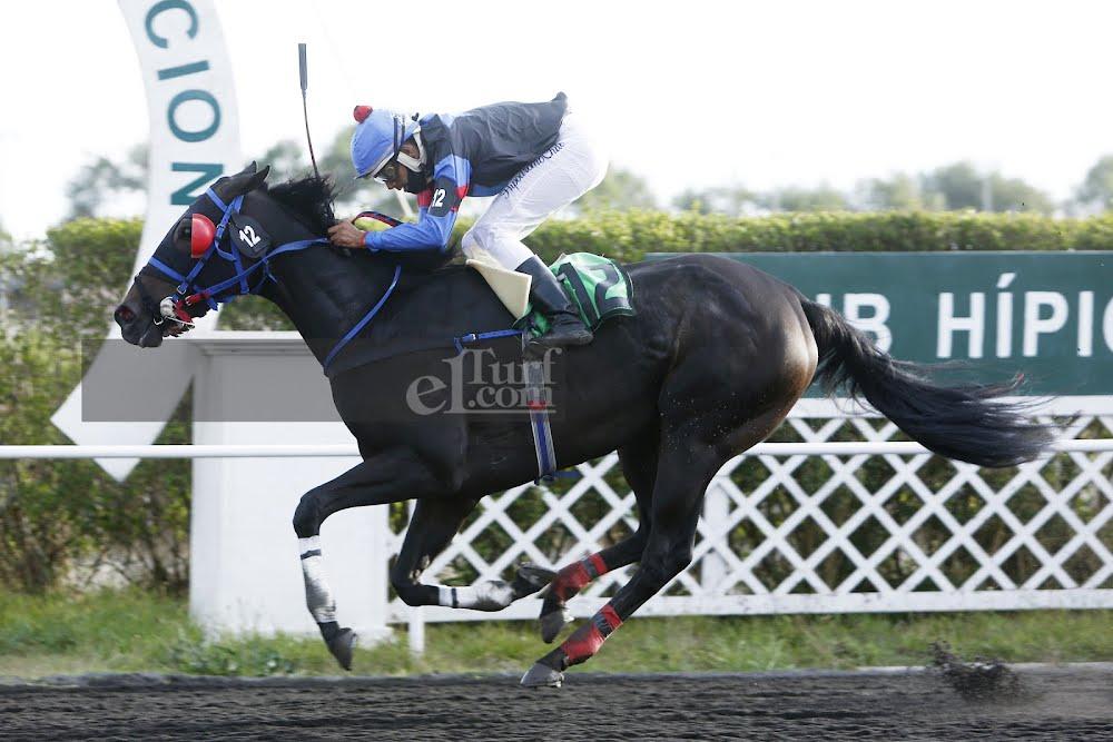 Be Royal (Scat Royal) se queda con Handicap (1100m-Arena-CHC). - Staff ElTurf.com