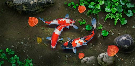 KOI Lucky Fish Live Wallpaper