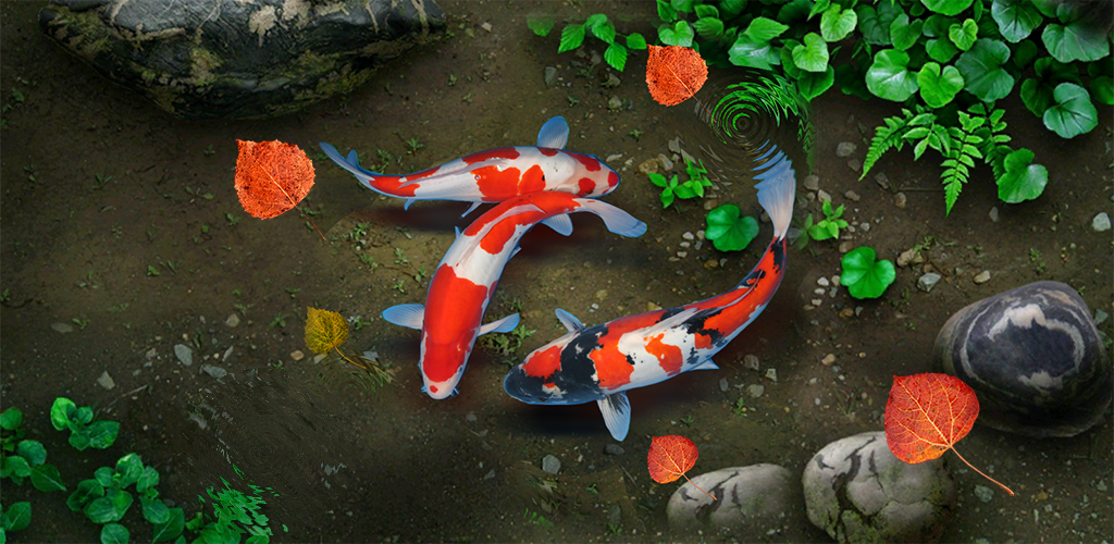 Koi Lucky Fish Live Wallpaper 1 0 Apk Download Sonisoft Lucky Koipond Livewallpaper Apk Free
