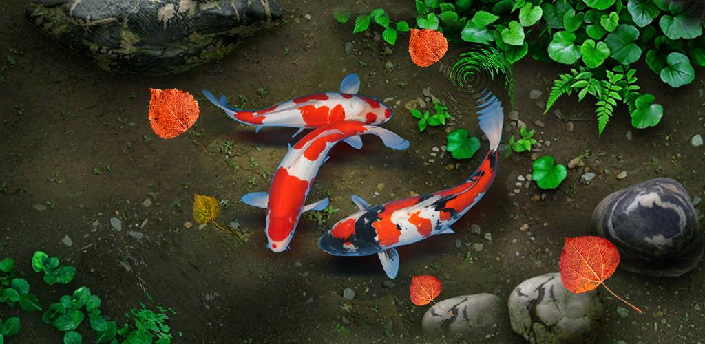 Koi Lucky Fish Live Wallpaper 1 0 Apk Download Sonisoft