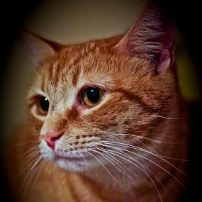 Rosie by Susan Farris - Animals - Cats Portraits ( cat, female, rosie, feline, kitty,  )