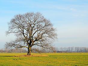 Photo: single  #treetuesday // +Tree TuesdayCurated by +Christina Lawrie , +Allan Cabrera , +Ralph Mendoza , +Kim Troutman and +David R Robinson