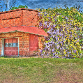 Wisteria in the Spring at Docs Garage by Russell McFarland - Buildings & Architecture Other Exteriors ( lexington sc, doc's garage lexington sc, lexington, columbia, columbia south carolina, garage, wisteria flowers, wisteria wall, south carolina, docs garage, columbia sc, wisteria, wall flowers, wallflower, doc's garage )