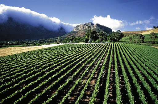 Grape prices at farm level, such as this one  in Franschhoek, Western Cape, are expected to trend upwards. Picture:  TISO
