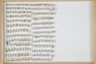 Photo: ZSM-HD-0001250 Various Ichneumonidae indet.