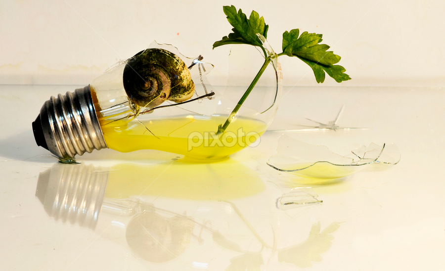 by Pete G. Flores - Artistic Objects Other Objects ( broken, water, autofocus, grass, green, electric, bulb, glass, artistic, snail,  )