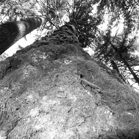 Walking Among Giants by Che Dean - Nature Up Close Trees & Bushes ( willamette park, tree, trees )