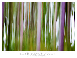 Photo: Pine Forest in Autumn  Here's a brand new image taken last week whilst on a recce through Strid Wood near Bolton Abbey in Wharfedale for the upcoming autumn workshops I'm doing with +sam oakes. There are tinges of autumn colour around but it's still predominantly green, so things are looking good for the end of October. As we were walking back through the woods the tall trunks in this pine plantation over the wall caught my eye so I made some abstract images using camera movement. I love the way this simplifies the landscape, concentrating the eye on colour and shape.  Canon EOS 5D, 24-105mm, ISO 200, 1/4s at f13