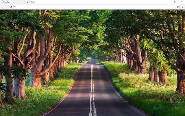 Forest Background New Tab