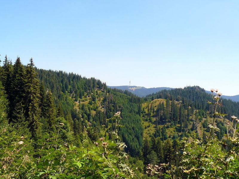 Гледка от Родопите