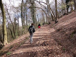 Photo: The Wysis Way through the Forest of Dean