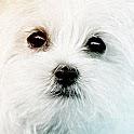 Тест Какая ты собака? Какой ты пес? icon
