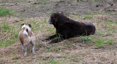 Photo: Visiting Bailey-dog