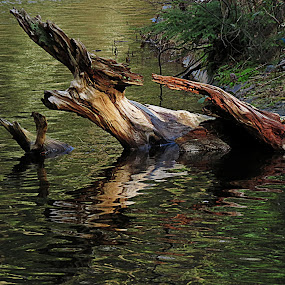 by Christopher Barker - Artistic Objects Other Objects ( detail, 2013, wood, monster, 2014, qwas, lake, win, new, driftwood, fresh, award5, quality, closeup )