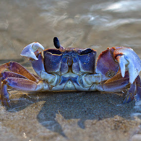 by Vadim Malinovskiy - Animals Sea Creatures