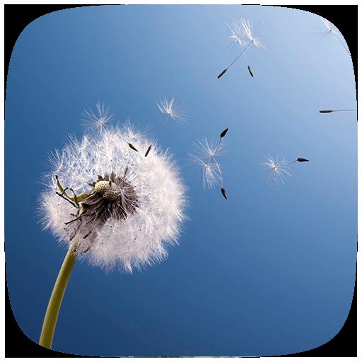 HD Dandelion Live wallpaper 個人化 LOGO-玩APPs