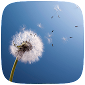 HD Dandelion Live wallpaper