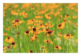 Photo: Eastern Sierras-20120717-774