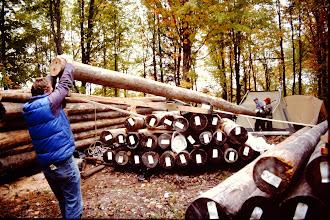 Photo: Handling logs.